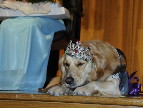 """Chloe following the homecoming festivities at Lexington High on Friday. Chloe was crowned """"Mini Queen."""""""