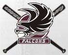 Kingsbury Falcons Boys Varsity Baseball Spring 17-18 team photo.